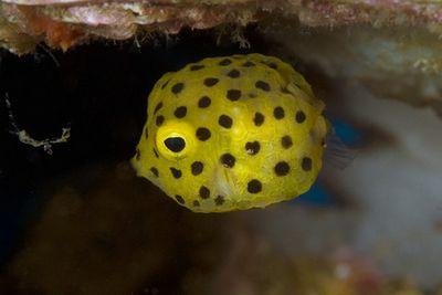 Boxfish 360 — панорамная камера для подводной съёмки в 5к (5 фото + видео)