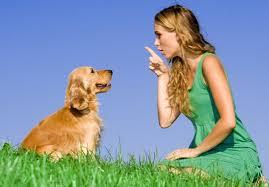 Чем важна дрессировка собак