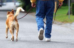 Как найти взрослой собаке хорошего хозяина