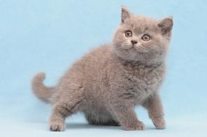 Как открыть питомник для кошек