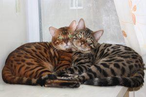 Как правильно выбрать питомник кошек