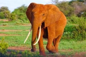 Как продать слона, или 51 прием заключеня сделки