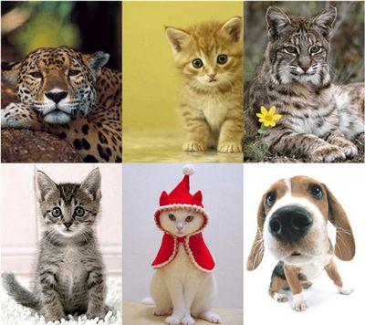 Какое животное мне подходит?