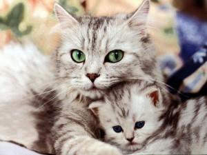 Кошки. кто они?
