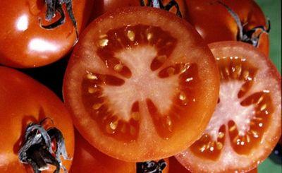 Марсианские помидоры - «наука»