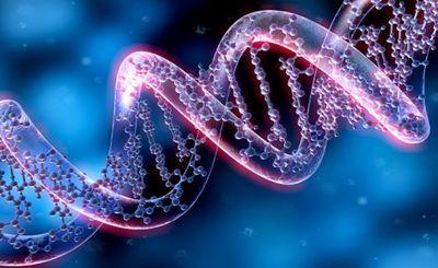 Масштабное генетическое исследование подтверждает уникальность финнов - «наука»