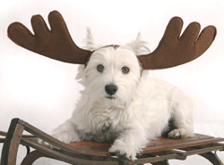 Оленьи рога для собак