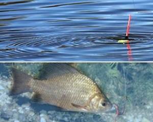 Особенности рыбалки на карася летом