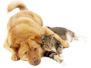 Первые симптомы болезни у кошек и собак