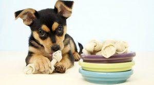 Полезные советы по уходу за собакой