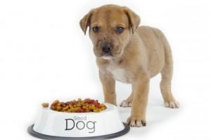 Профессиональные советы по выбору кормов для собак