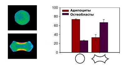 Программирование стволовых клеток с помощью углов