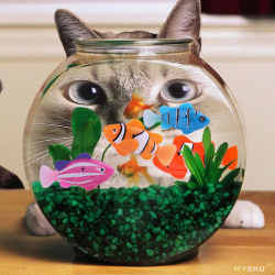Робот-рыбка: игрушка, которой можно ловить щуку