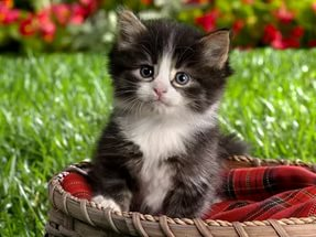 Советы по уходу за кошками