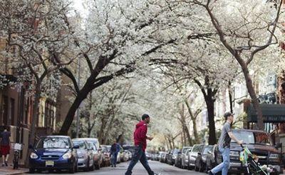 Среди деревьев действительно легче дышать? - «наука»