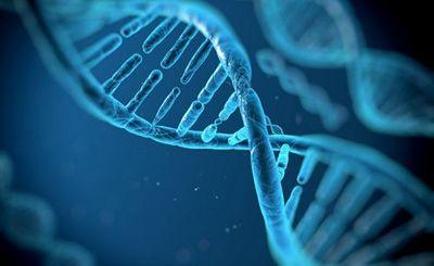 Вирусные «окаменелости» в нашей днк помогают бороться с инфекциями - «наука»